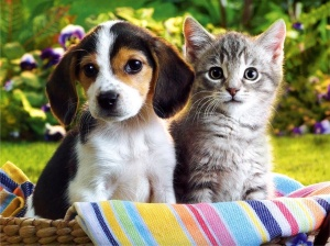 Kitten and Puppy hd Wallpapers_4