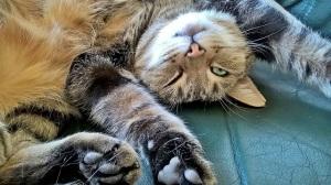 cat-1009284_640