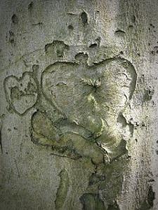 tree-1334609_640